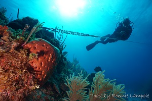 Diving picture of Guardalavaca, Cuba