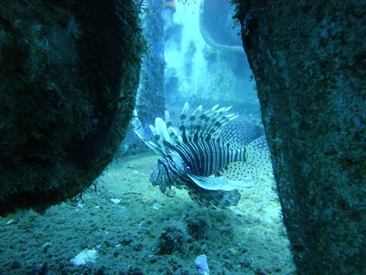 Diving-in-Paphos