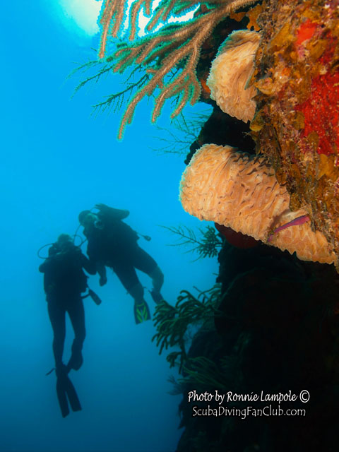 dykning i bali