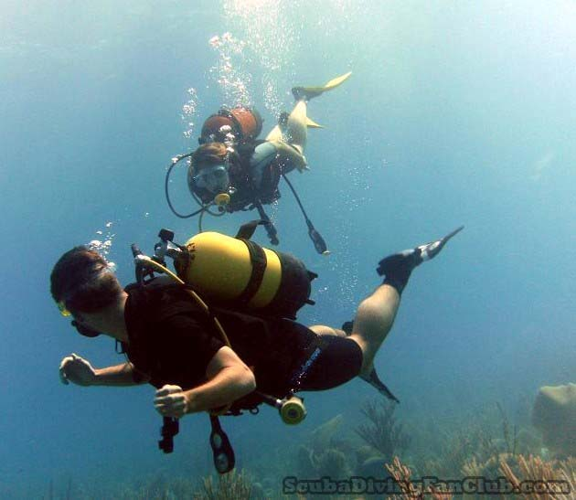 Diving Buddy always together