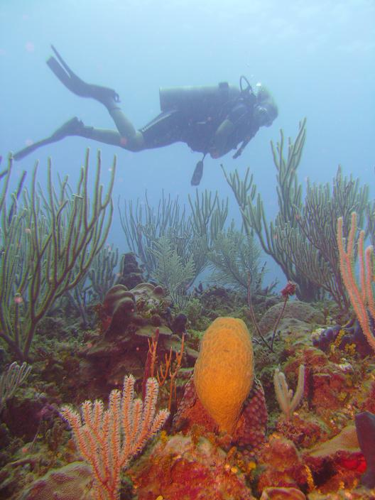 underwater world, diver over corals