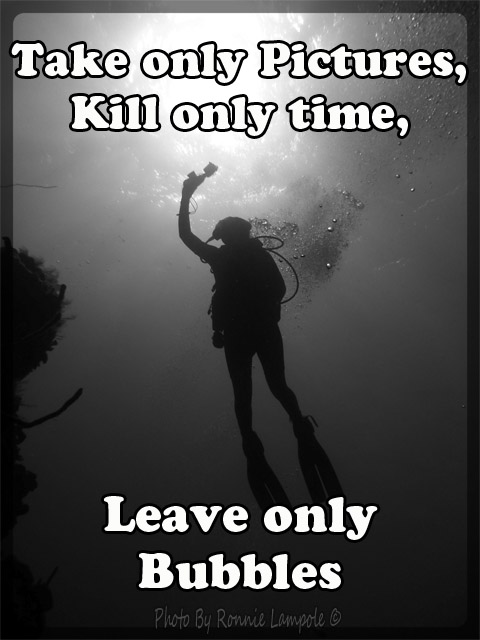 Diving quote.